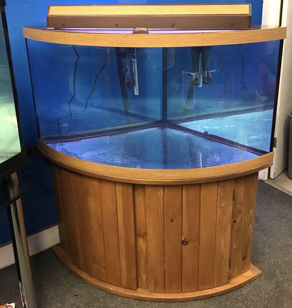 92 Gallon Corner Bowfront Aquarium Fish Tank Complete Set Up 700 For Sale In Philadelphia PA