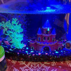 Fish Tank And Kit Thumbnail