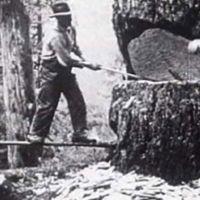 Lumberjack7
