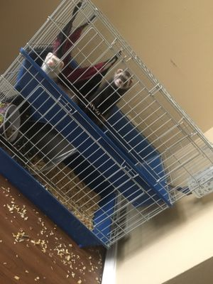 Ferret Cage for sale | Only 4 left at -70%