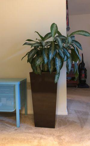 Plant for Sale in Lincolnia, VA