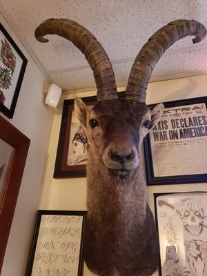Spanish Ibex Goat Mount /Taxidermy for Sale in Seattle, WA