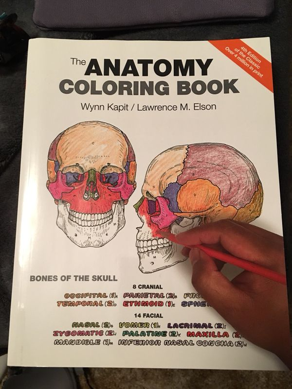 Anatomy Coloring Book Books Magazines In Buffalo NY