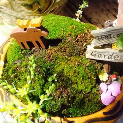 Miniature Fairly Garden...Live Moss And Plants Thumbnail
