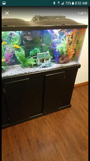 55 gallon fish aquarium for Sale in Seattle, WA