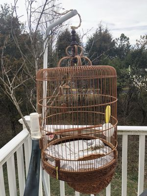 Male canary canaries with vintage cage for Sale in Manassas, VA
