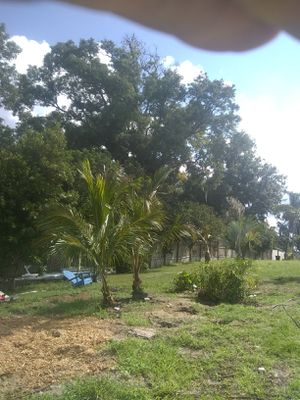 Matching coconut palms we deliver and plant for Sale in Orlando, FL