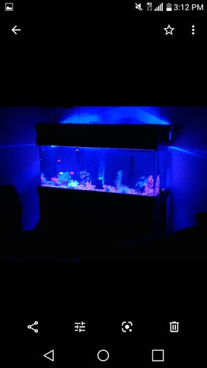Photo 75 gallon Tank stand and supplies