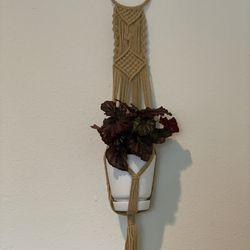 Macrame Hanger With Plant Thumbnail