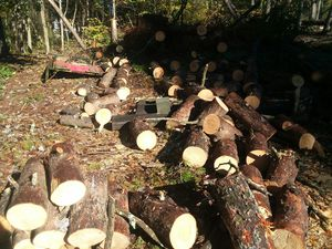 Pine Logs Free for Sale in Browns Summit, NC
