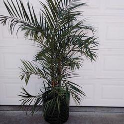Artficial plant Thumbnail