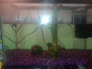 Fish tank and accessories for Sale in Clermont, FL