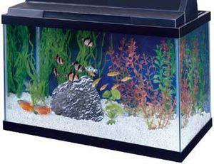 10 gallon fish tank for Sale in Silver Spring, MD
