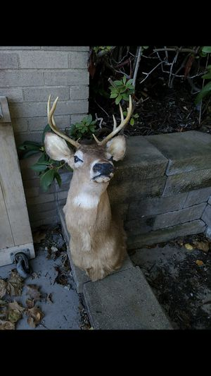 8 point buck shoulder mount for Sale in McKnight, PA