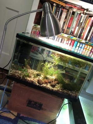 10 gallon aquarium/ fish tank entire setup for Sale in Washington, DC