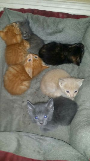 Cats free for Sale in Las Vegas, NV