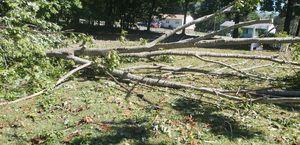Free Oak firewood for Sale in Farmville, VA