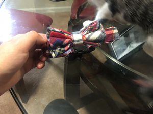 Bow tie Dog/cat collar for Sale in Silver Spring, MD