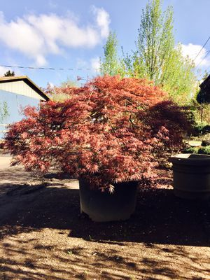 Lopez Nursery Everything 50 Off For In Vancouver Wa