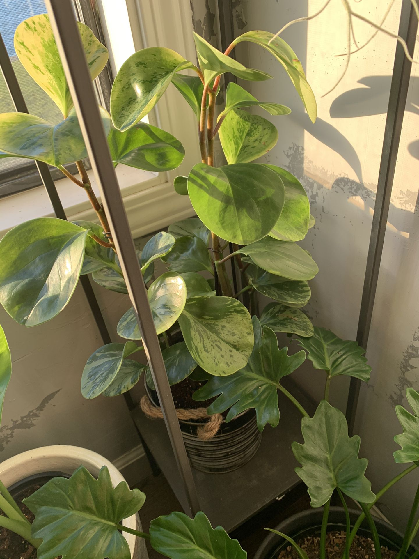 House Plants For Sale/trade