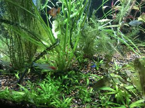 Huge aquarium fish tank plant package. Come get it !! for Sale in Tacoma, WA
