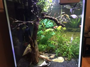 Fish Tank 125G for Sale in Gaithersburg, MD