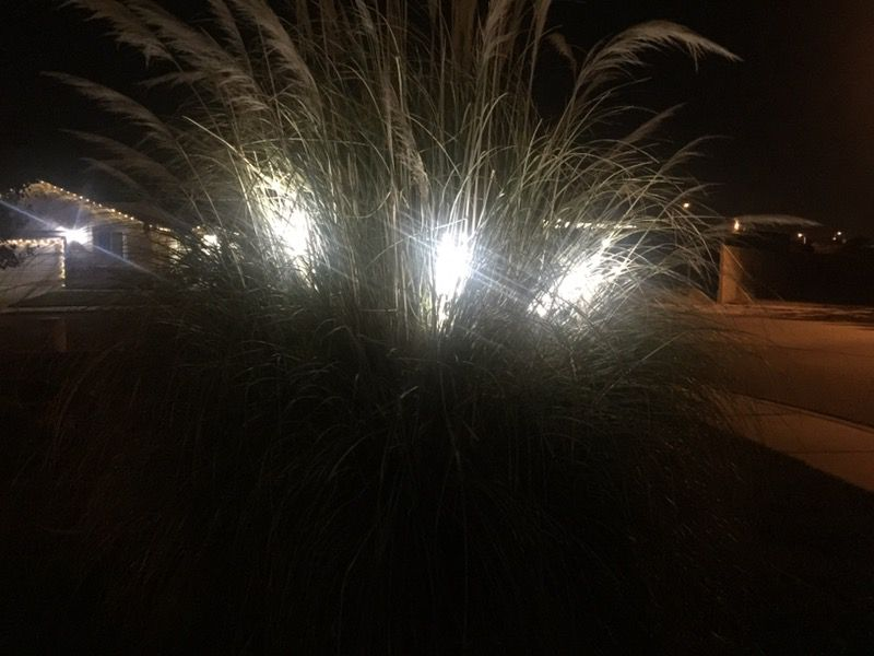 Led withe pine branch stakes