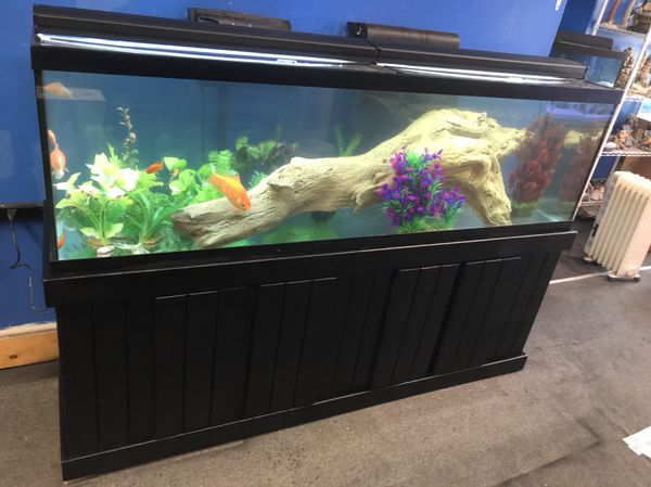 125 Gallon Aquarium Led Lighting Best Accent Chairs And