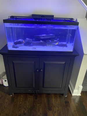 Photo 40 gallon Fish tank With the Stand !! With 8 Cichlids and food , it comes with black sand not the white sand 👌🏻 and No LED LIGHT 👌🏻 Everything must g