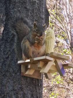 Rustic squirrel picnic tables Thumbnail