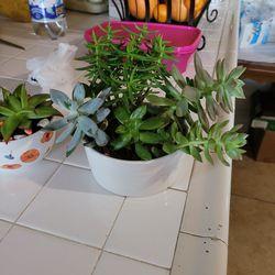 Plantas Naturales Thumbnail