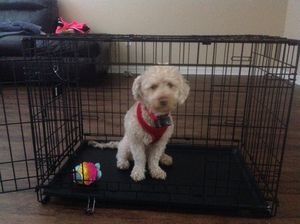 Medium Dog Cage for Sale in Orlando, FL