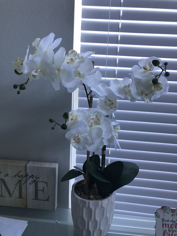 White Orchid Plant For Sale In Charlotte Nc Offerup