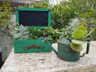 Fairy Gardens & Succulents Thumbnail