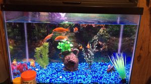Fish tank bundle for Sale in Martinsburg, WV