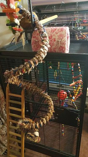 A & E split level play top cage for Sale in Alexandria, VA