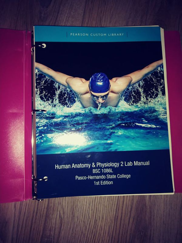 Human Anatomy and Physiology 2 Lab Manual PHSC 1st edition for Sale ...