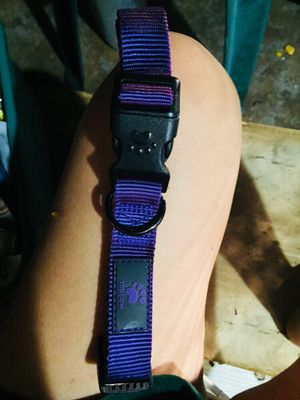 Large dog collar for Sale in Davenport, FL