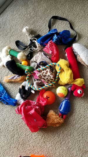 Free Dog Toys & Accessories for Sale in Union Park, FL