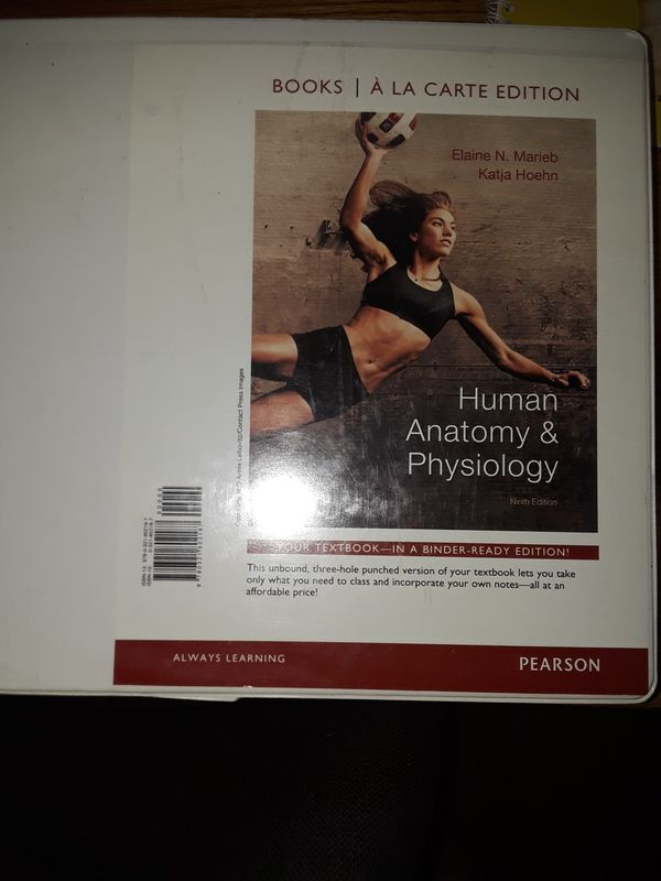 Skull for Anatomy and Physiology and Anatomy Physiology textbook ...