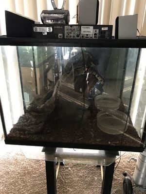 Tank and reptile for Sale in Oxon Hill, MD