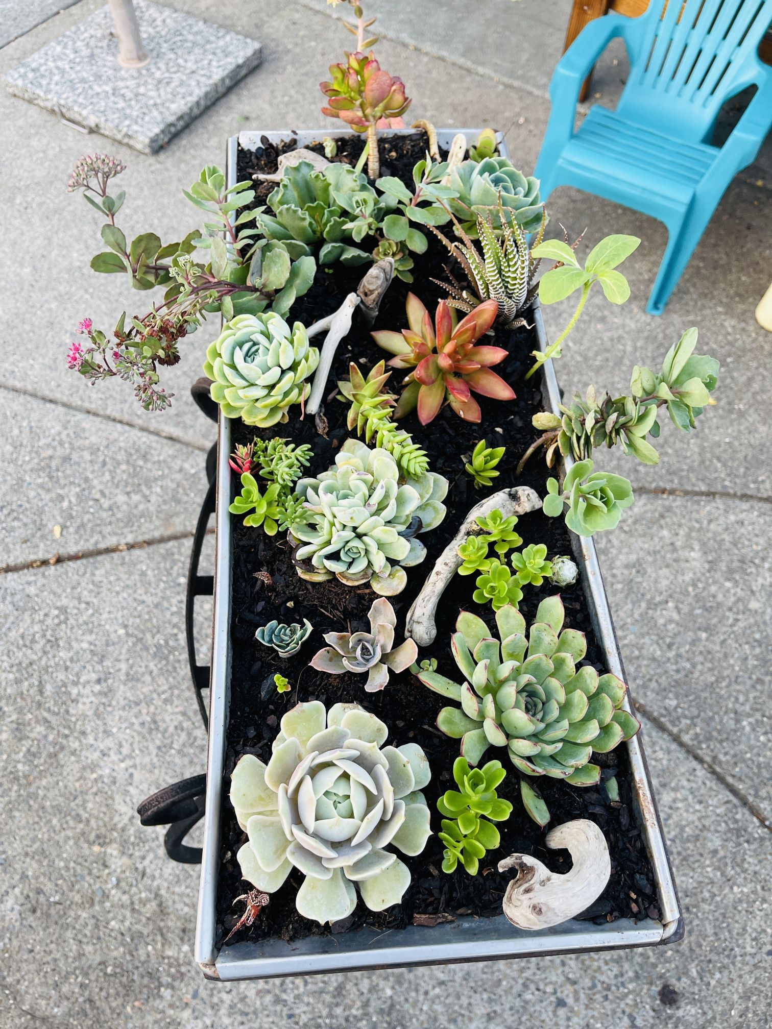 Mixed Succulent Centerpieces With Hawaiian Beachwood Accents