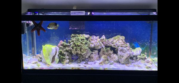 75 gallon saltwater aquarium for Sale in Greenwood, IN - OfferUp