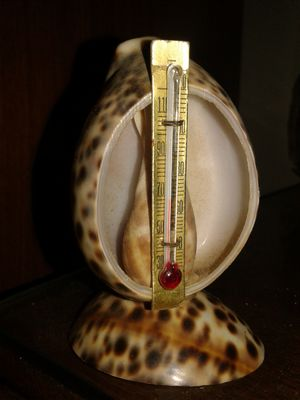 SEASHELL THERMOMETER for Sale in TN, US