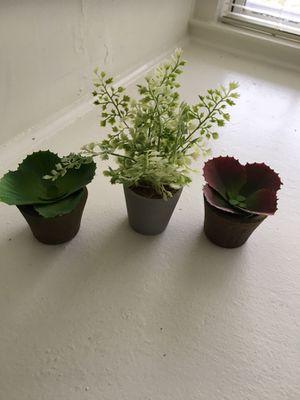 Faux Succulents & plant for Sale in Alexandria, VA