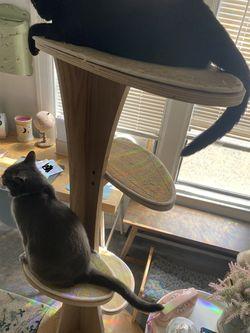 Cat Tree Thumbnail