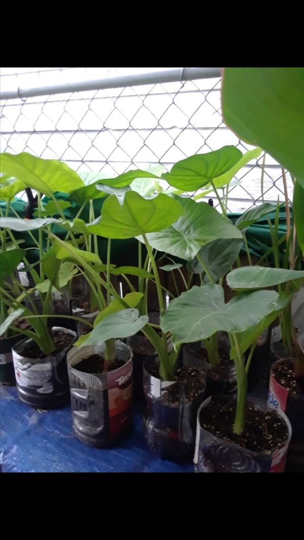 Plants Flowers Orange Avocado And Lemon Trees For Sale In