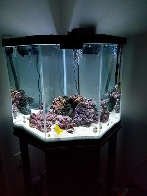 Aquarium hexagon 44 gallon corner tank for Sale in Falls Church, VA