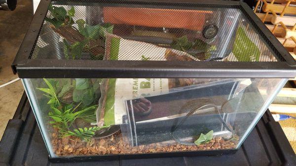 Reptile Terrarium With Heater Starter Kit For Sale In Austin Tx