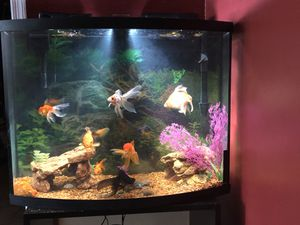 Fish Tank With 9 Goldfish for Sale in Colesville, MD